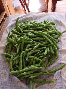 beans3sm1.JPG