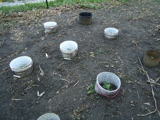 garden142