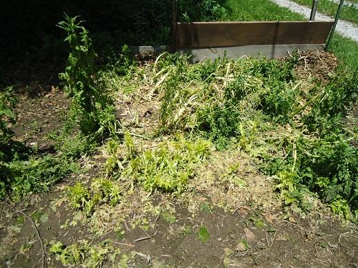 hail garden 1