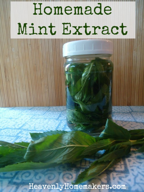 Homemade Mint Extract 2