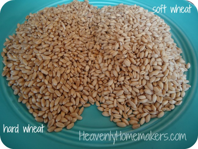 hard wheat soft wheat