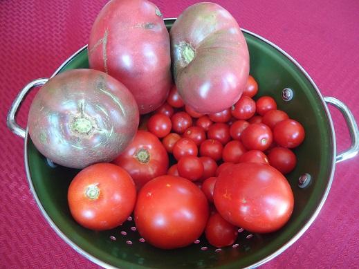 garden tomatoes 2